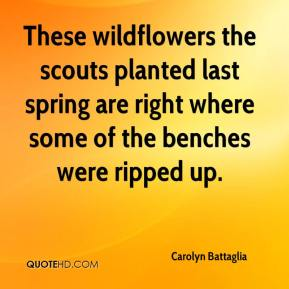 Carolyn Battaglia - These wildflowers the scouts planted last spring are right where some of the benches were ripped up.