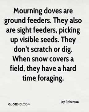 Jay Roberson  - Mourning doves are ground feeders. They also are sight feeders, picking up visible seeds. They don't scratch or dig. When snow covers a field, they have a hard time foraging.