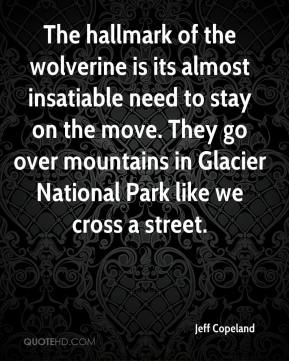 Jeff Copeland  - The hallmark of the wolverine is its almost insatiable need to stay on the move. They go over mountains in Glacier National Park like we cross a street.