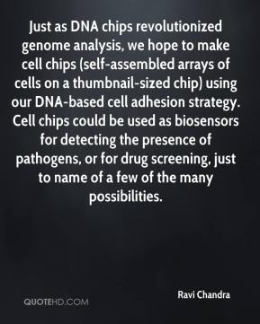 Just as DNA chips revolutionized genome analysis, we hope to make cell chips (self-assembled arrays of cells on a thumbnail-sized chip) using our DNA-based cell adhesion strategy. Cell chips could be used as biosensors for detecting the presence of pathogens, or for drug screening, just to name of a few of the many possibilities.