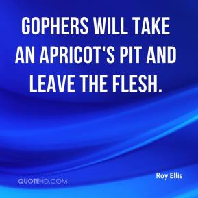 Roy Ellis  - Gophers will take an apricot's pit and leave the flesh.
