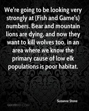 We're going to be looking very strongly at (Fish and Game's) numbers. Bear and mountain lions are dying, and now they want to kill wolves too, in an area where we know the primary cause of low elk populations is poor habitat.