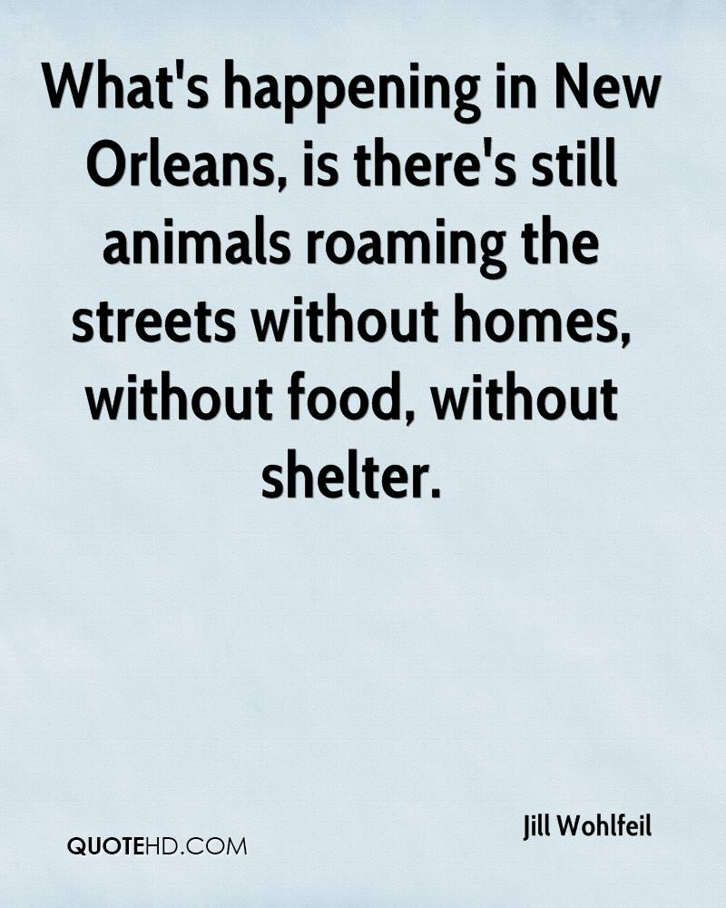 What's happening in New Orleans, is there's still animals roaming the streets without homes, without food, without shelter.