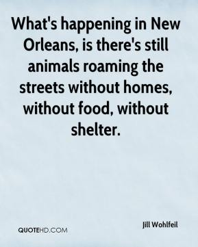 Jill Wohlfeil  - What's happening in New Orleans, is there's still animals roaming the streets without homes, without food, without shelter.