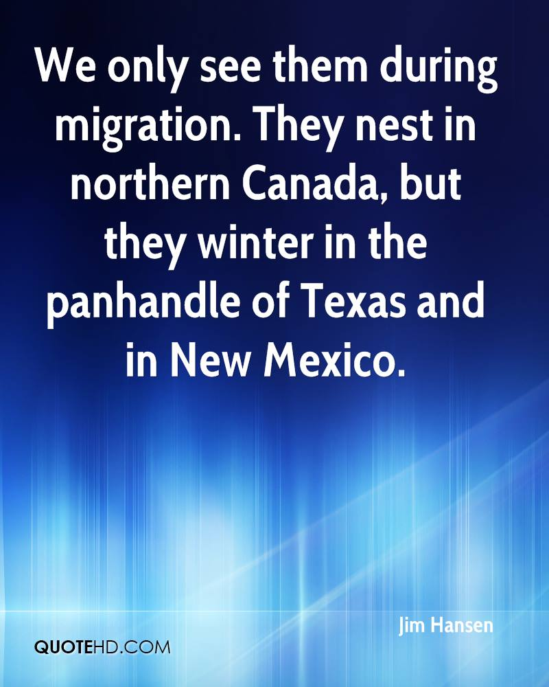 We only see them during migration. They nest in northern Canada, but they winter in the panhandle of Texas and in New Mexico.