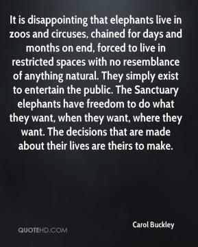 Carol Buckley - It is disappointing that elephants live in zoos and circuses, chained for days and months on end, forced to live in restricted spaces with no resemblance of anything natural. They simply exist to entertain the public. The Sanctuary elephants have freedom to do what they want, when they want, where they want. The decisions that are made about their lives are theirs to make.