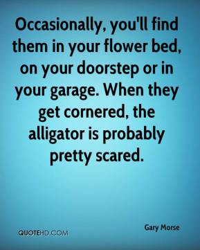 Gary Morse - Occasionally, you'll find them in your flower bed, on your doorstep or in your garage. When they get cornered, the alligator is probably pretty scared.