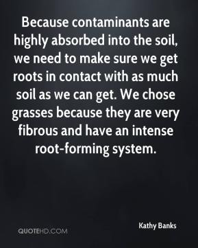 Kathy Banks  - Because contaminants are highly absorbed into the soil, we need to make sure we get roots in contact with as much soil as we can get. We chose grasses because they are very fibrous and have an intense root-forming system.