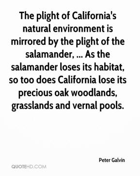 The plight of California's natural environment is mirrored by the plight of the salamander, ... As the salamander loses its habitat, so too does California lose its precious oak woodlands, grasslands and vernal pools.