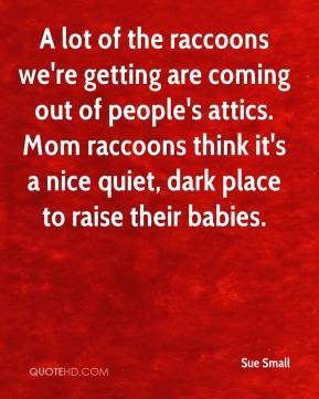 Sue Small  - A lot of the raccoons we're getting are coming out of people's attics. Mom raccoons think it's a nice quiet, dark place to raise their babies.