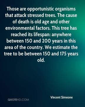 Vincent Simeone  - Those are opportunistic organisms that attack stressed trees. The cause of death is old age and other environmental factors. This tree has reached its lifespan: anywhere between 150 and 200 years in this area of the country. We estimate the tree to be between 150 and 175 years old.