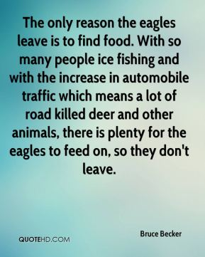 Bruce Becker - The only reason the eagles leave is to find food. With so many people ice fishing and with the increase in automobile traffic which means a lot of road killed deer and other animals, there is plenty for the eagles to feed on, so they don't leave.