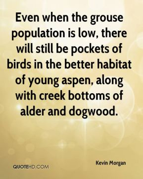 Kevin Morgan  - Even when the grouse population is low, there will still be pockets of birds in the better habitat of young aspen, along with creek bottoms of alder and dogwood.