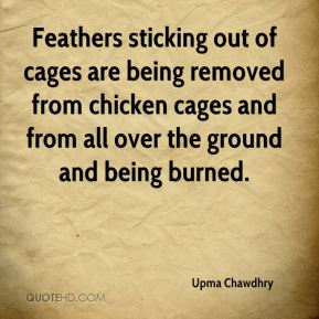 Upma Chawdhry  - Feathers sticking out of cages are being removed from chicken cages and from all over the ground and being burned.