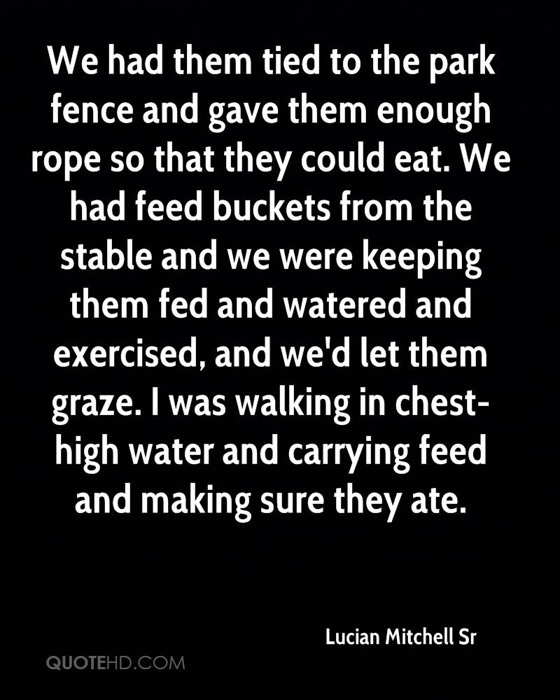 We had them tied to the park fence and gave them enough rope so that they could eat. We had feed buckets from the stable and we were keeping them fed and watered and exercised, and we'd let them graze. I was walking in chest-high water and carrying feed and making sure they ate.