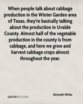 Kenneth White  - When people talk about cabbage production in the Winter Garden area of Texas, they're basically talking about the production in Uvalde County. Almost half of the vegetable production in the county is from cabbage, and here we grow and harvest cabbage crops almost throughout the year.