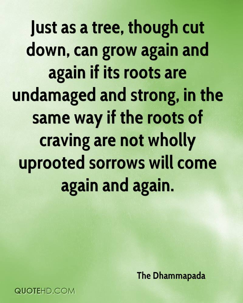 Just as a tree, though cut down, can grow again and again if its roots are undamaged and strong, in the same way if the roots of craving are not wholly uprooted sorrows will come again and again.