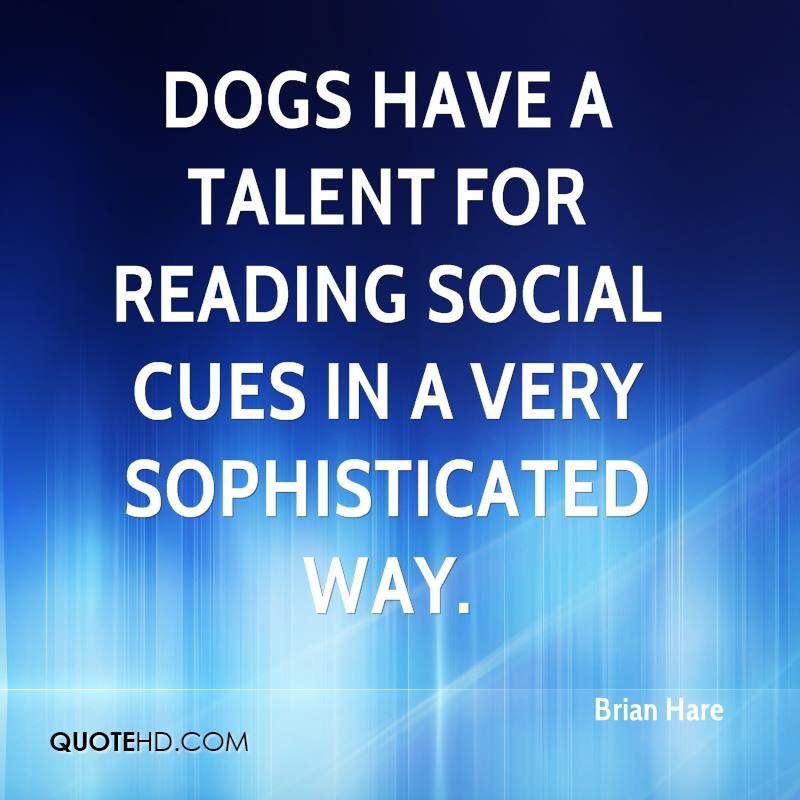 Dogs have a talent for reading social cues in a very sophisticated way.