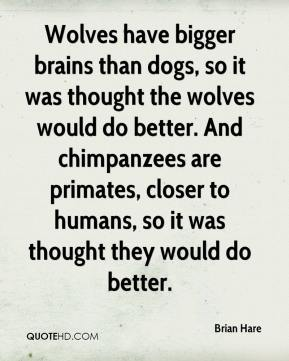 Wolves have bigger brains than dogs, so it was thought the wolves would do better. And chimpanzees are primates, closer to humans, so it was thought they would do better.