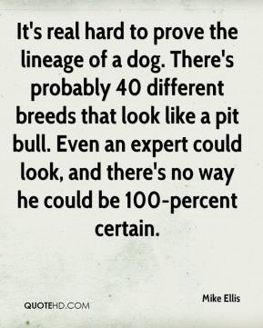 Mike Ellis  - It's real hard to prove the lineage of a dog. There's probably 40 different breeds that look like a pit bull. Even an expert could look, and there's no way he could be 100-percent certain.