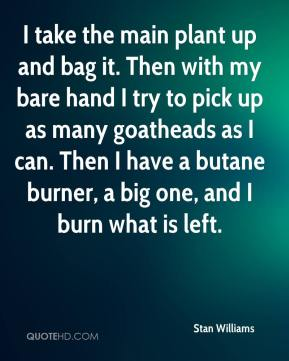 Stan Williams  - I take the main plant up and bag it. Then with my bare hand I try to pick up as many goatheads as I can. Then I have a butane burner, a big one, and I burn what is left.