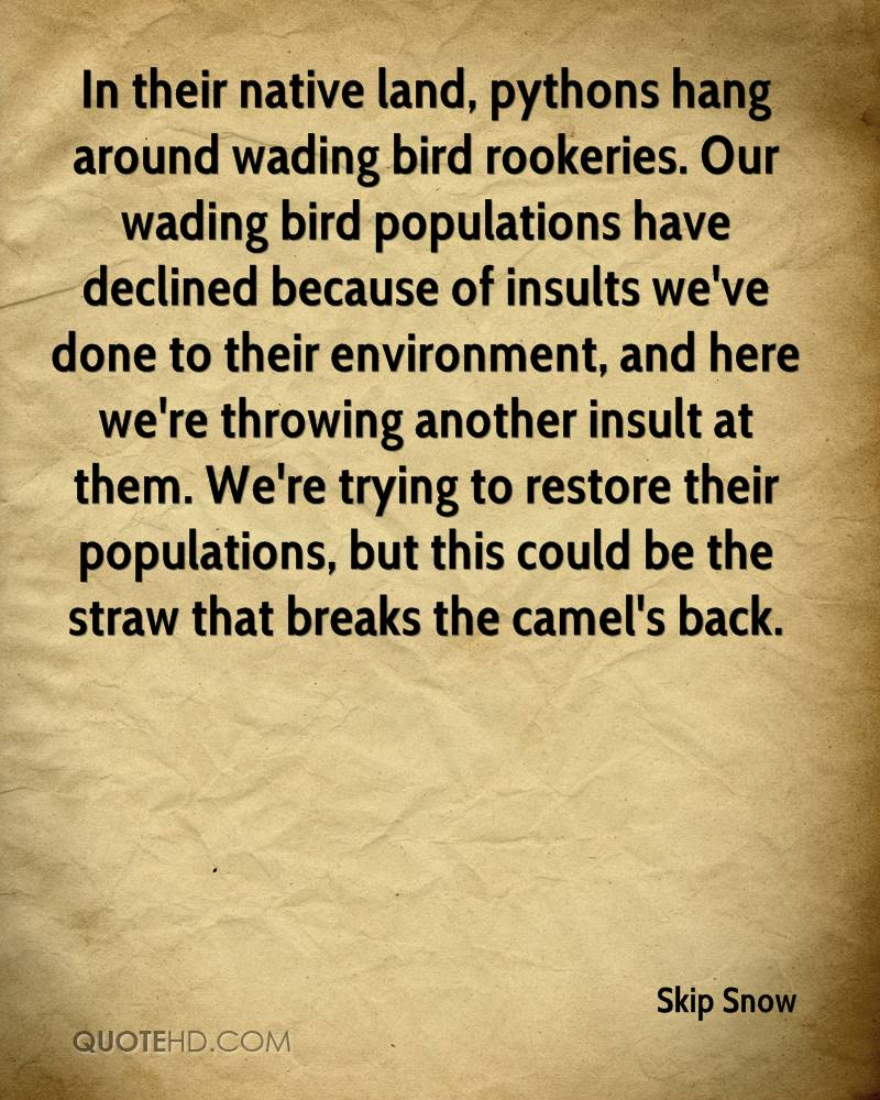 In their native land, pythons hang around wading bird rookeries. Our wading bird populations have declined because of insults we've done to their environment, and here we're throwing another insult at them. We're trying to restore their populations, but this could be the straw that breaks the camel's back.