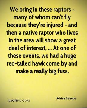Adrian Benepe - We bring in these raptors - many of whom can't fly because they're injured - and then a native raptor who lives in the area will show a great deal of interest, ... At one of these events, we had a huge red-tailed hawk come by and make a really big fuss.