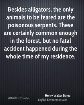 Henry Walter Bates - Besides alligators, the only animals to be feared are the poisonous serpents. These are certainly common enough in the forest, but no fatal accident happened during the whole time of my residence.
