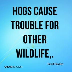 David Hayden - Hogs cause trouble for other wildlife.