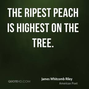 The ripest peach is highest on the tree.