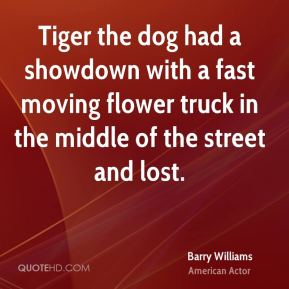 Barry Williams - Tiger the dog had a showdown with a fast moving flower truck in the middle of the street and lost.