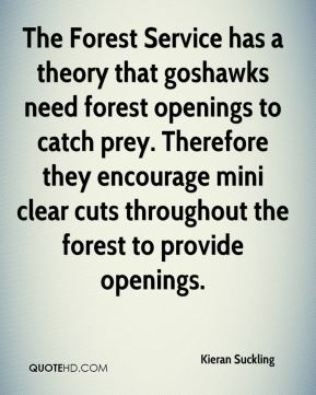 Kieran Suckling  - The Forest Service has a theory that goshawks need forest openings to catch prey. Therefore they encourage mini clear cuts throughout the forest to provide openings.