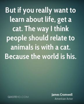 But if you really want to learn about life, get a cat. The way I think people should relate to animals is with a cat. Because the world is his.