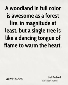 A woodland in full color is awesome as a forest fire, in magnitude at least, but a single tree is like a dancing tongue of flame to warm the heart.