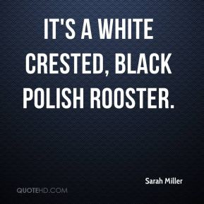 Sarah Miller  - It's a white crested, black Polish rooster.