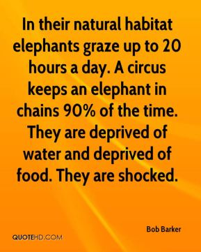 Bob Barker - In their natural habitat elephants graze up to 20 hours a day. A circus keeps an elephant in chains 90% of the time. They are deprived of water and deprived of food. They are shocked.