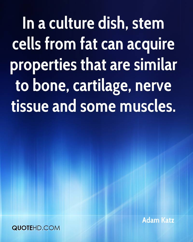 In a culture dish, stem cells from fat can acquire properties that are similar to bone, cartilage, nerve tissue and some muscles.