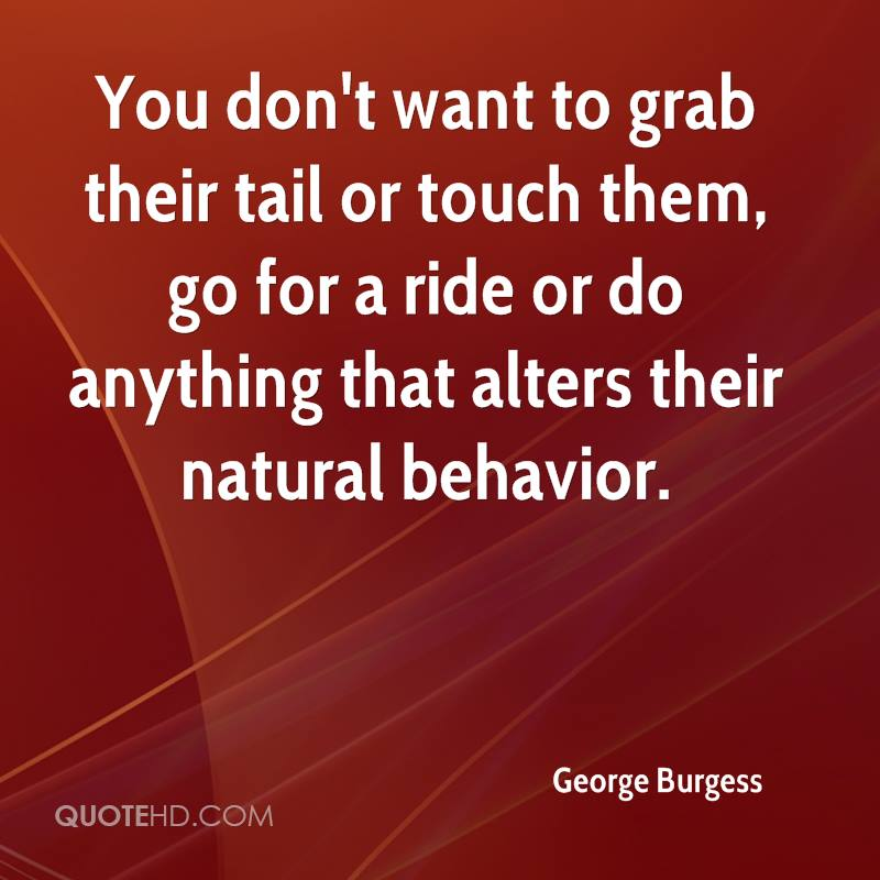 You don't want to grab their tail or touch them, go for a ride or do anything that alters their natural behavior.
