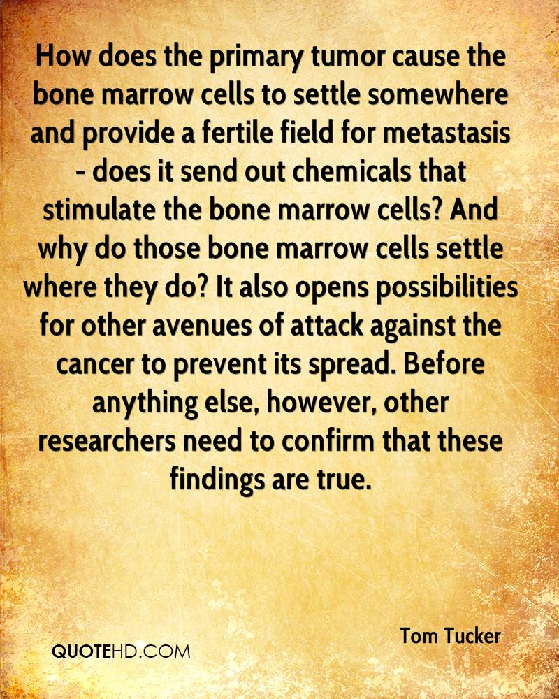 How does the primary tumor cause the bone marrow cells to settle somewhere and provide a fertile field for metastasis - does it send out chemicals that stimulate the bone marrow cells? And why do those bone marrow cells settle where they do? It also opens possibilities for other avenues of attack against the cancer to prevent its spread. Before anything else, however, other researchers need to confirm that these findings are true.