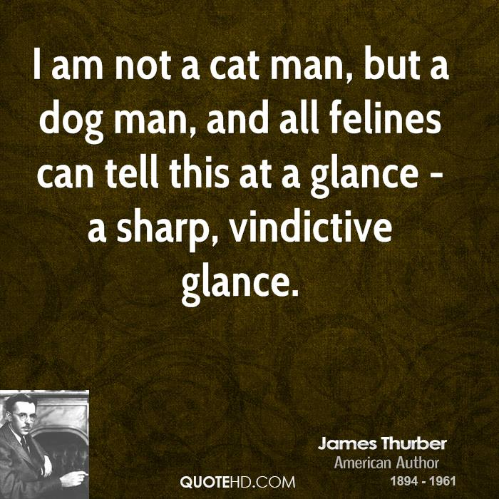 I am not a cat man, but a dog man, and all felines can tell this at a glance - a sharp, vindictive glance.