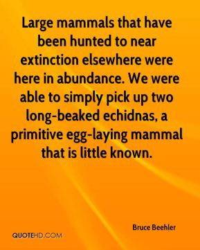 Bruce Beehler - Large mammals that have been hunted to near extinction elsewhere were here in abundance. We were able to simply pick up two long-beaked echidnas, a primitive egg-laying mammal that is little known.