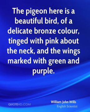 The pigeon here is a beautiful bird, of a delicate bronze colour, tinged with pink about the neck, and the wings marked with green and purple.