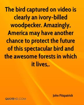 John Fitzpatrick  - The bird captured on video is clearly an ivory-billed woodpecker. Amazingly, America may have another chance to protect the future of this spectacular bird and the awesome forests in which it lives.