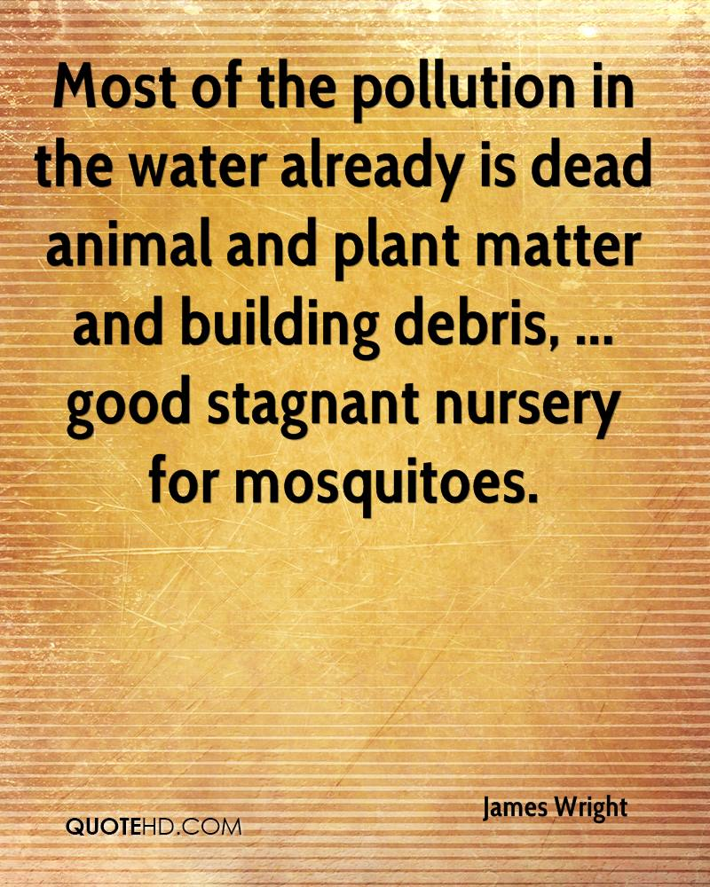 Most of the pollution in the water already is dead animal and plant matter and building debris, ... good stagnant nursery for mosquitoes.