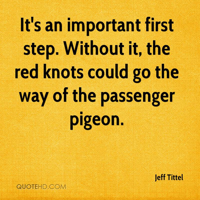 It's an important first step. Without it, the red knots could go the way of the passenger pigeon.