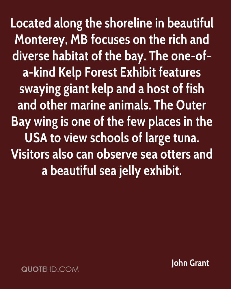 Located along the shoreline in beautiful Monterey, MB focuses on the rich and diverse habitat of the bay. The one-of-a-kind Kelp Forest Exhibit features swaying giant kelp and a host of fish and other marine animals. The Outer Bay wing is one of the few places in the USA to view schools of large tuna. Visitors also can observe sea otters and a beautiful sea jelly exhibit.