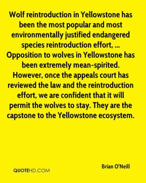 Brian O'Neill - Wolf reintroduction in Yellowstone has been the most popular and most environmentally justified endangered species reintroduction effort, ... Opposition to wolves in Yellowstone has been extremely mean-spirited. However, once the appeals court has reviewed the law and the reintroduction effort, we are confident that it will permit the wolves to stay. They are the capstone to the Yellowstone ecosystem.