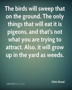 The birds will sweep that on the ground. The only things that will eat it is pigeons, and that's not what you are trying to attract. Also, it will grow up in the yard as weeds.