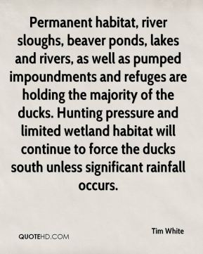 Tim White  - Permanent habitat, river sloughs, beaver ponds, lakes and rivers, as well as pumped impoundments and refuges are holding the majority of the ducks. Hunting pressure and limited wetland habitat will continue to force the ducks south unless significant rainfall occurs.