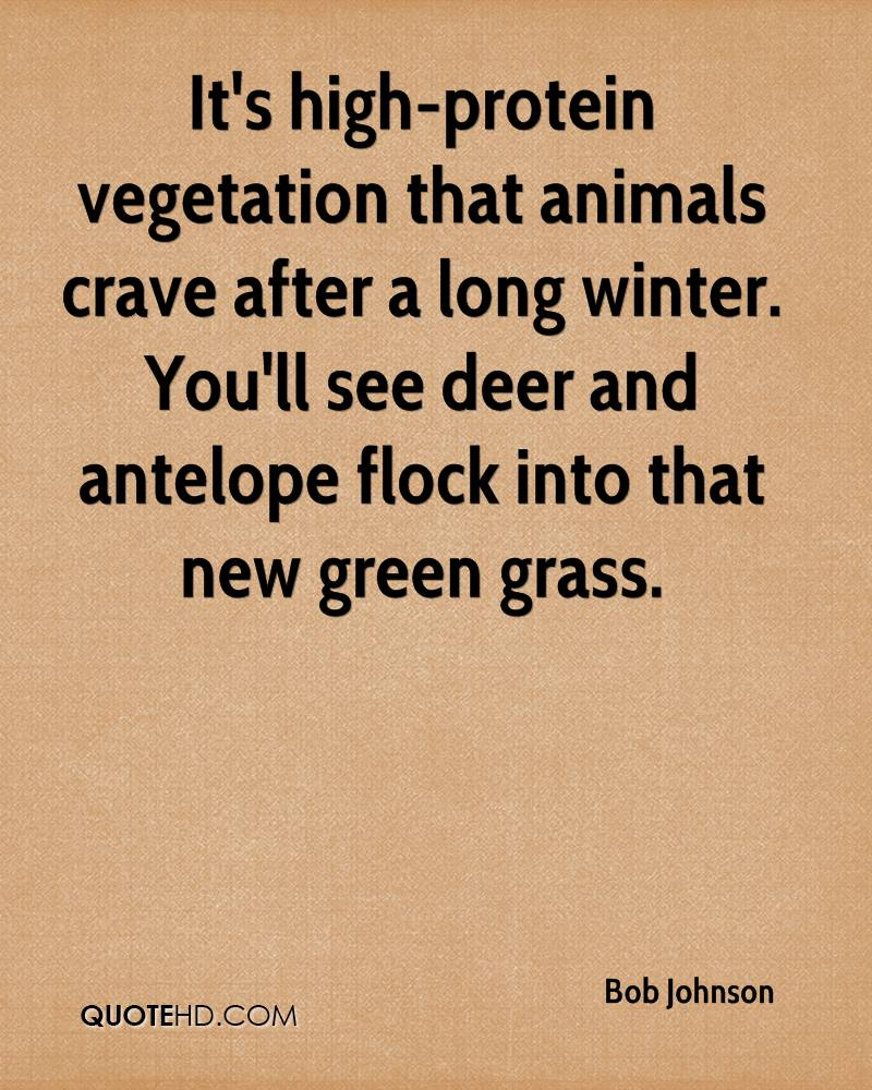 It's high-protein vegetation that animals crave after a long winter. You'll see deer and antelope flock into that new green grass.